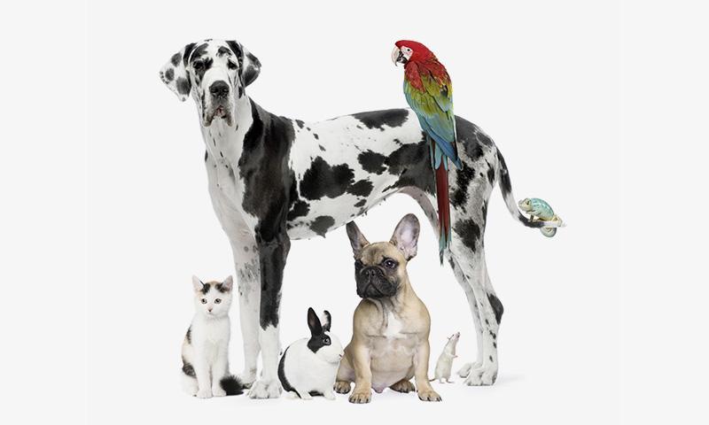 Пет-терапия: как животные нас лечат