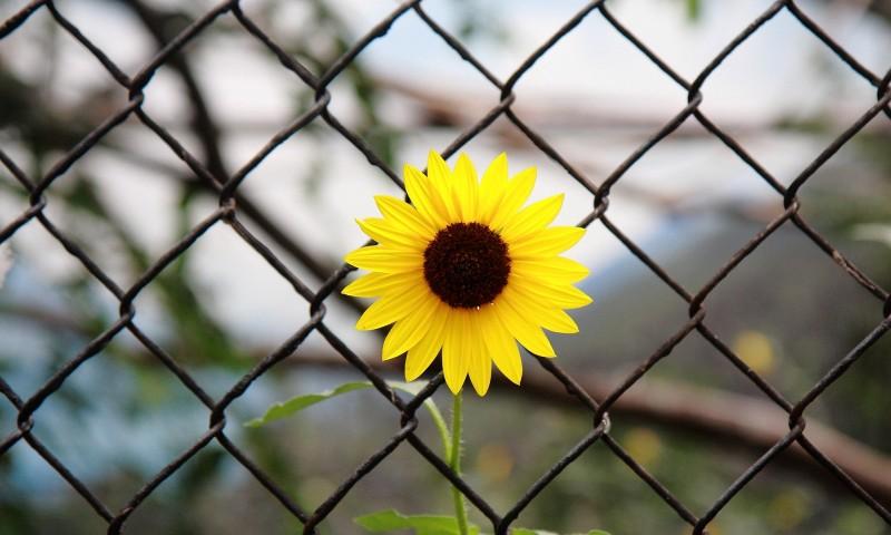Стремление к превосходству как преодоление комплекса неполноценности