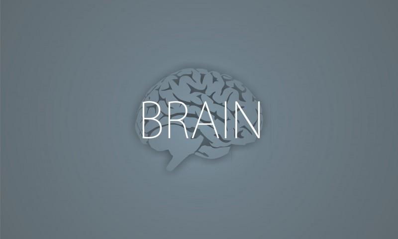 Правила мозга. Что нужно знать о мозге